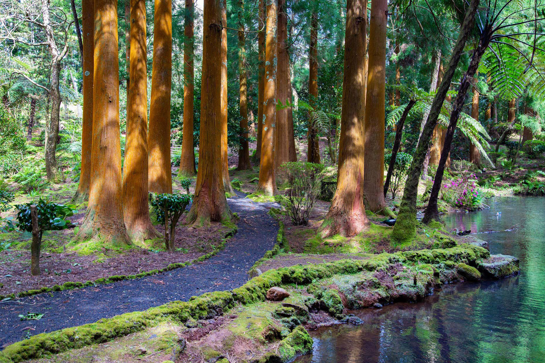 Sao-Jorge-Azores-Forest-Travel-Photography-Caryn-B-Davis
